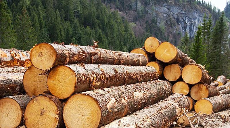 Контрабанда леса процветает